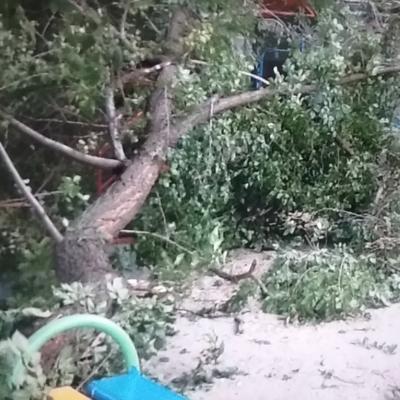 В центре Киева на детскую площадку рухнуло огромное дерево (фото)