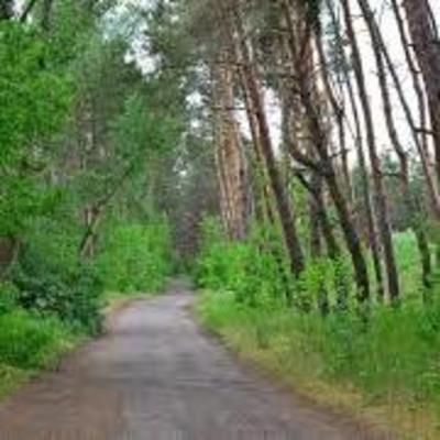 На Черниговщине мужчина убил грибника, который зашел на его частную территорию