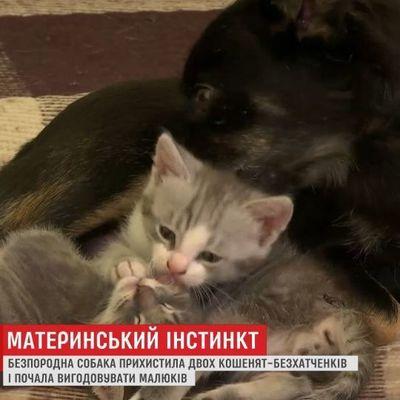 Собака выкормила двоих котят в Одессе