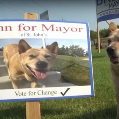В мэры канадского городка баллотируется пес