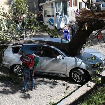 В центре Львова дерево разбило автомобиль