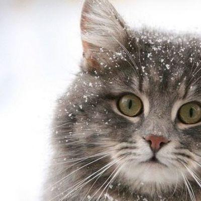 В Украине будет резкое похолодание