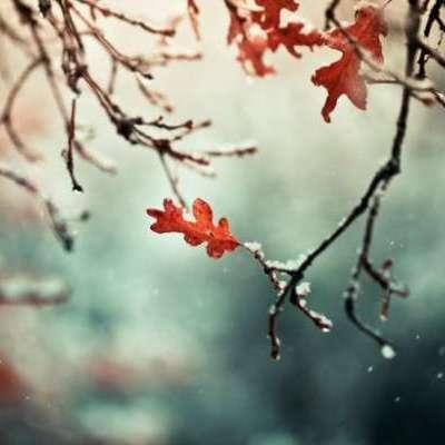Заморозки и мокрый снег: стал известен прогноз погоды на октябрь