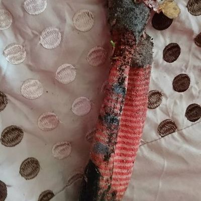 Английская семья вызвала спасателей из-за обнаруженной в доме гигантской ящерицы, которая оказалась….грязным носком (фото)