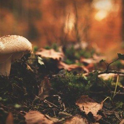 На Волыне от отравления грибами умер подросток