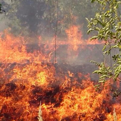 Лесной пожар под Кременчугом: спасатели перекрыли трассу и эвакуируют людей
