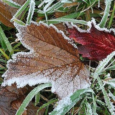 Синоптики предупреждают о заморозках в Украине 27-28 сентября