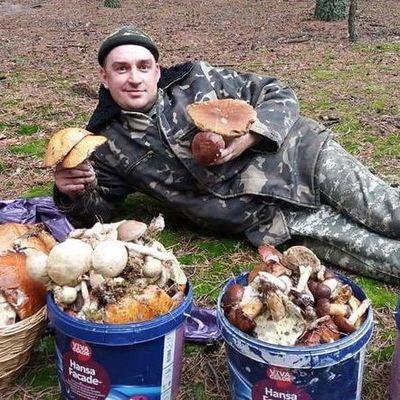 В украинских лесах из-за грибов убивают