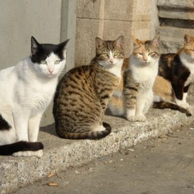 В Киеве садист за два месяца убил и изуродовал 15 котов