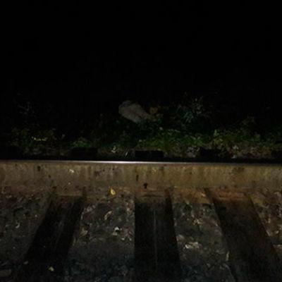 Поезд сбил мужчину насмерть в Черновцах