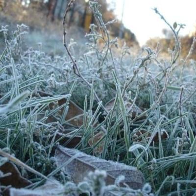 Синоптики прогнозируют заморозки по всей Украине в ближайшие дни
