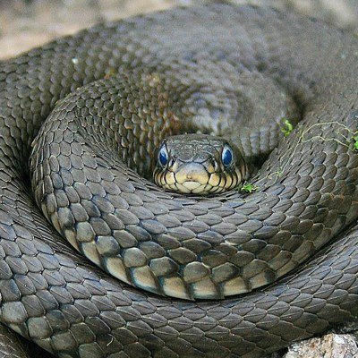 Киевлян напугала внезапно выползшая на набережную змея (фото)