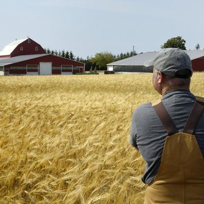 Украинцам предлагают сделать новый выходной 19 июня - День фермера