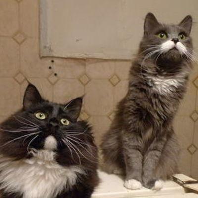 В Украине введут налог на котов