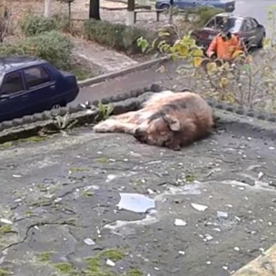 В Луцке хозяин выбросил свою собаку с балкона многоэтажки (видео)