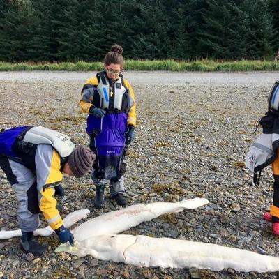 Ученые сделали на Аляске удивительную находку