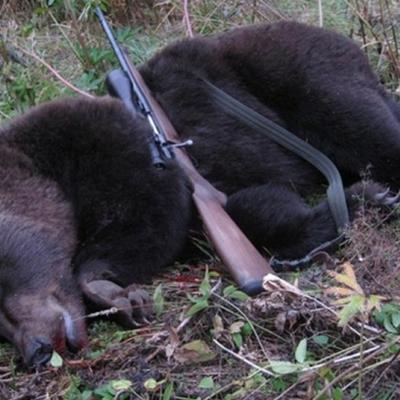 В Карпатах браконьеры жестоко убили медведя и оленя из заповедника