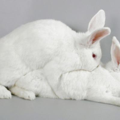 Польский минздрав призвал граждан размножаться по примеру кроликов