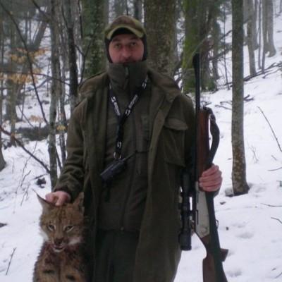 В Карпатах убили рысь, которая занесена в Красную книгу