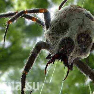 Девушка стала «заложницей» огромного паука  (видео)