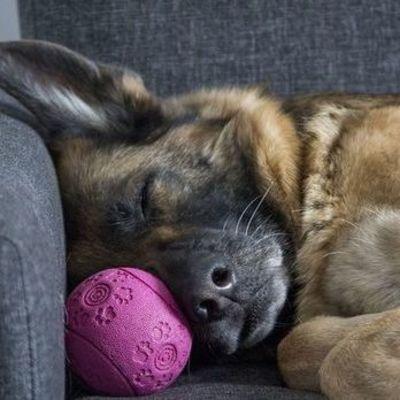 Житель Харькова получил более трех лет тюрьмы за заказное убийство собаки