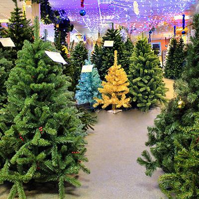 В Украине началась продажа дешевых новогодних елок