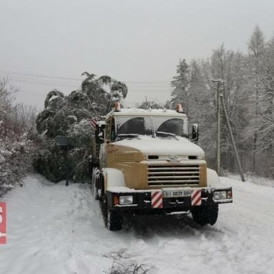С доставкой главной елки страны в Киев возникли проблемы (фото)