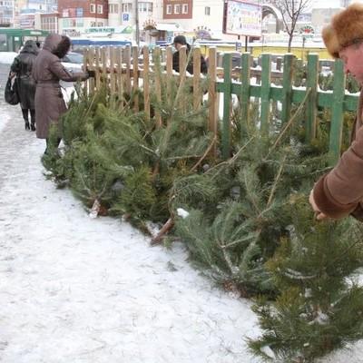 Во сколько киевлянам обойдутся новогодние елки