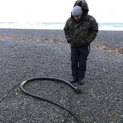 Жуткие животные: 25-метровых червей выбросило на побережье Чукотки