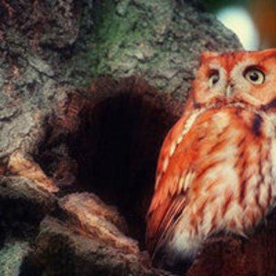 «Красная сова»: в сети набирает пополярности новая смертельная забава