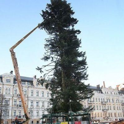 Стало известно, почему Киев получил лысую елку (фото)