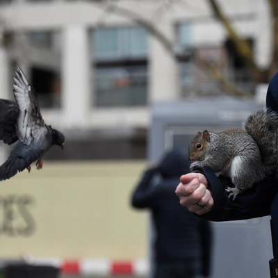 В Лондоне белка и голуби устроили настоящее побоище за еду (фоторепортаж)