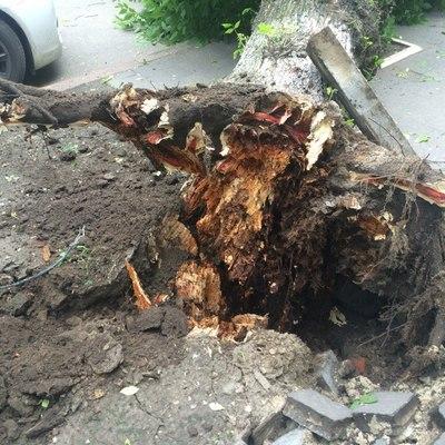 В центре Киева на проезжую часть упало дерево