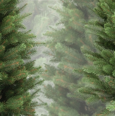Цены на елки в Киеве достигают 600 гривен