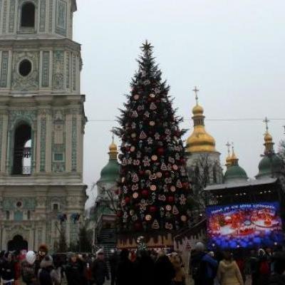 Под корень: В Киеве вандалы вырубили молодые ели (фото)