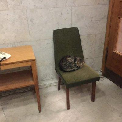 МИД Украины «трудоустроило» кота Амбассадора