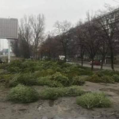 Прощай, елка, Новый год: киевлян шокировало «кладбище» новогодних елок