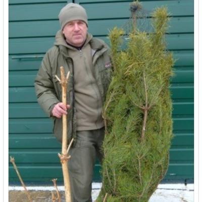 В Межигорье просят отдавать новогодние елки на пропитание животным