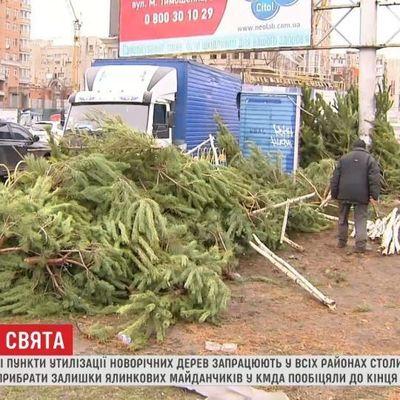 На уборку елочных кладбищ в Киеве потратят 300 тысяч гривен