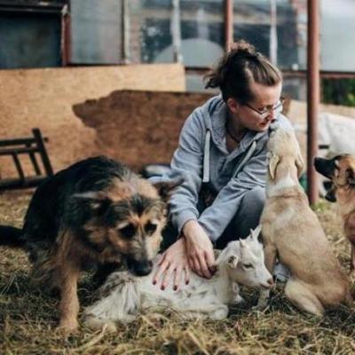 Животные на грани смерти: в крупнейший приют Львовщине пришла беда