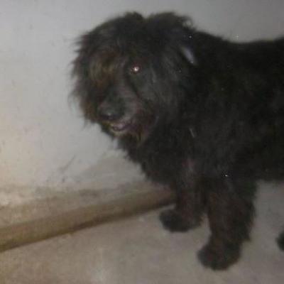 Жестокое убийство собаки в Киеве: животное скончалось в мучениях