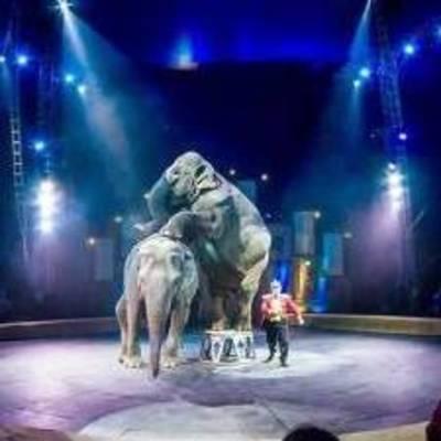 В Киеве запретили работу цирка, в котором обнаружили корь
