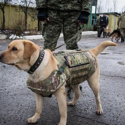 В Киеве произошло дерзкое ограбление