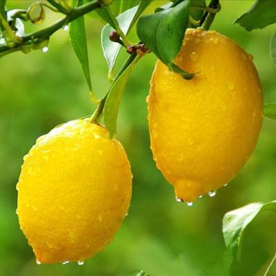 Лимоны лучше любых диет помогают бороться с лишним весом