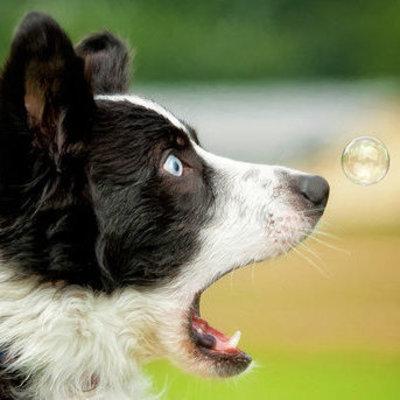 В США собаке оформили пособие по безработице
