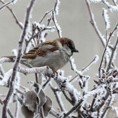 Прогноз погоды в Украине: когда и насколько сильно похолодает