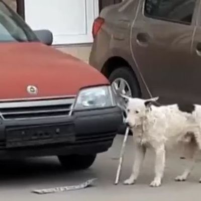 В Ялте пес оторвал от авто российский регистрационный номер (видео)