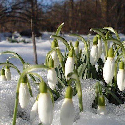 Синоптик рассказал, каким будет март