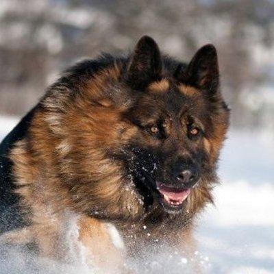 На Львовщине собаки насмерть загрызли мужчину