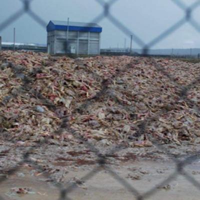 В Киевской области село находится на грани экологической катастрофы